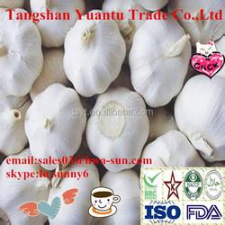 garlic products