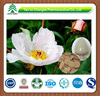 GMP factory supply Hot sale high quality White peony root extract