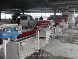 hot sales Industrial fruit and vegetable brush washer