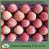 Wholesale Price Bulk Fresh Apples