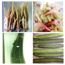 Thailand vegetables,Fruits,dry foodstuff