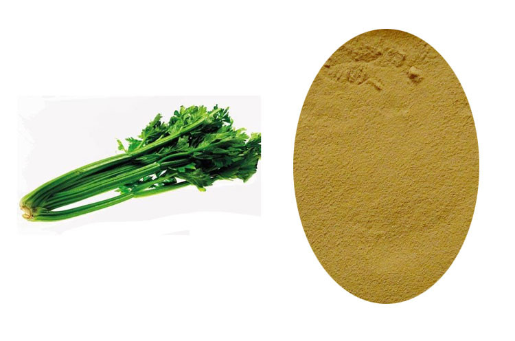 100% Organic Dehydrated Celery/Celery Seed Extract/Celery Leaves Powder