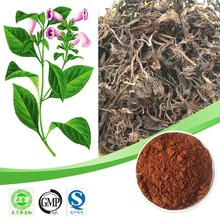 Hot sales Indigowoad leaf extract/Ratio 10:1 20:1/Cardiovascular factory supply