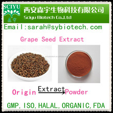 98% OPC Grape seed extract / Vitis vinifera
