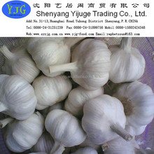 New crop Chinese pure garlic good quality best price from shandong