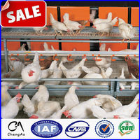 China Factory direct supply Broiler chicken cage for poultry farm
