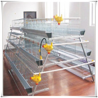 automatic chicken layer cage/chicken egg poultry farm equipment/small chicken coop design