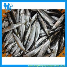 Fresh frozen mackerel price on sale