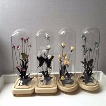mini simulation of micro landscape glass dome with specimen