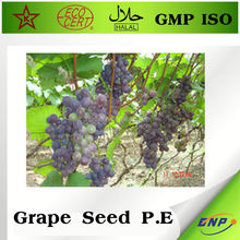 health food grape seed extract softgel
