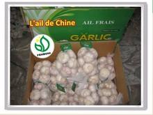 Chinese normal white garlic price Garlic/AJO/AIL/ALHO