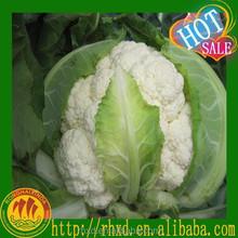 Chinese Fresh Cauliflower /Sale White Broccoli