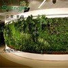 SJYH851 china products vertical plant artificial walls plastic green wall vertical wall garden