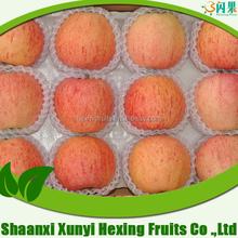 fresh apple fruit in china