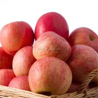 Bulk Chinese Red Fuji Apple All Names Fruits Fresh