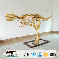 Fashionable showcase decorate golden dinosaur skeleton