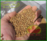 Wholesale Chinese Gmo Bulk Dried Organic Brown Roasted Buckwheat