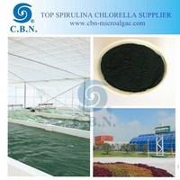Wholesale spirulina protein powder