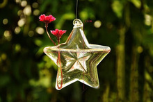 Star Hanging Glass Plant Flower Vase Hydroponic Container Pot Wedding Decor