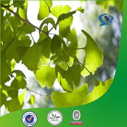 ginkgo flavone glycosides terpene lactones, ginkgo leaf/ extract powder