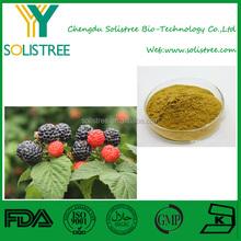 plant extract Raspberry extract/Rubus idaeus L/Raspberry Ketone