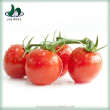 Nouvelle génération vente chaude délicieux tin emballage conserve tomate ketchup marque