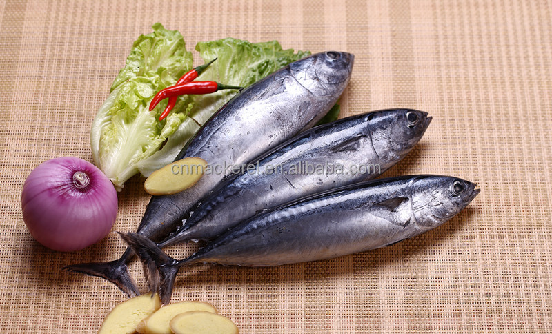 Huge Quantity Frozen Seafood Bonito 300-500g(Auxis thazard) Supply