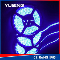 Blue Color 2 Years Warranty Waterproof LED Light Strip Wholesale CE