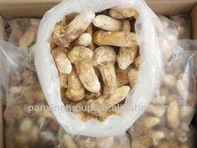 wild mushrooms(matsutake/boletus edulis)