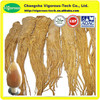 high quality Dong Quai Extract / best price angelica sinensis p.e. / 100% pure Dong Quai Extract powder