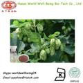 Humulus lupulus extrait poudre/houblon extrait de poudre/houblon huile
