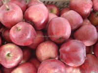 2015 new crop fresh red mature huaniu apple factory directly exporters