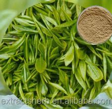 Supply Natural Tea Polyphenol 30%-98% Green Tea Extract