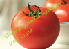 wholesale high quality chinese fresh tomato for big sale