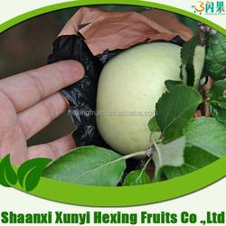Fuji apple wholesale fruit factory