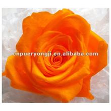 2015 Best Selling Wedding Gifts 100% Natural Preserved Big Roses