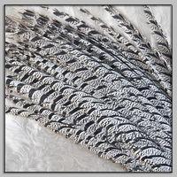 Wholesale bird feathers in bulk