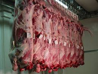 Halal Frozen Carcas, Kidney, Bone Marrow, Liver, Leg