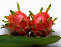 High Quality Fresh Organic White Dragon Fruit For Sale