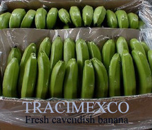 Fresh Cavendish Banana at fair price