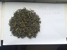 Green tea - new season in Moc Chau, Viet nam