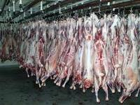 Affordable Halal Fresh / Frozen Goat / Lamb / Sheep Meat