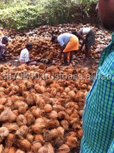 Best Quality Coconut suppliers to Mauritius