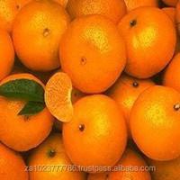 Fresh Mandarin Oranges New Fruits high quality GRADE A FOR SALE HOT SALES
