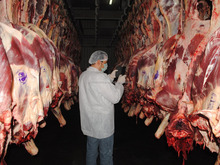 Fresh Beef/veal/ mouton meat for export