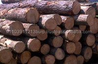 We Sell OAK / ASH / BEECH / PINE / SPUCE / BIRCH logs