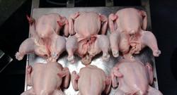 Halal Certified Frozen Whole Chicken(GRADES A)