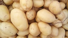 DUTCH GOLDEN YELLOW POTATOES