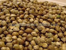 Hempseed Extract seed powder