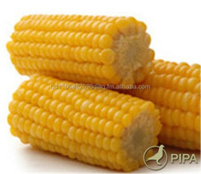 maize, corn, wheat, millet and pigeon grit